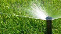 Jen voda nestačí. Čím prospějete zahradním rostlinám?