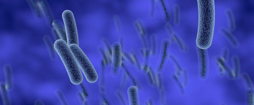 Bakterie Legionella pneumophila